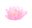lotos-sebepoznani-1001