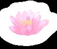 Květ lotosu